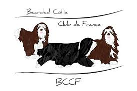Club Officiel du Bearded Collie Club Français