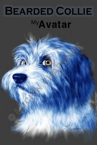 Carte potale N°49 : Bearded Collie mon avatar 2
